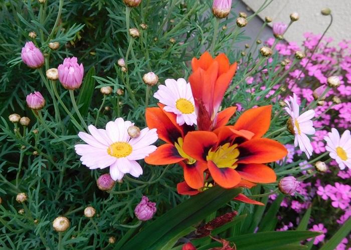 花盛り3004 (2)
