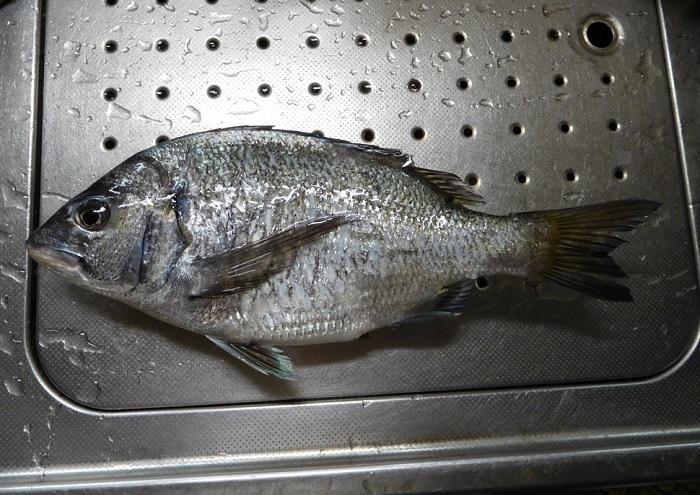 釣り日和3004 (1)
