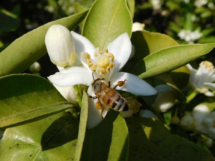 いよかんとミツバチ3004 (1)