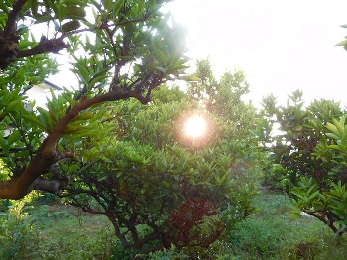 夜明け3005 (2)