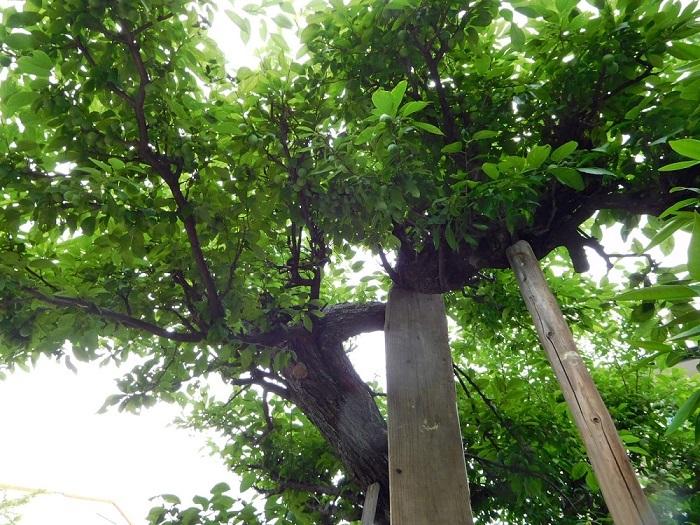 老木と仏様3005 (4)