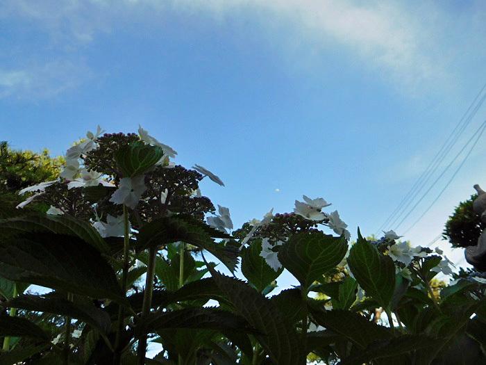 紫陽花の空3005