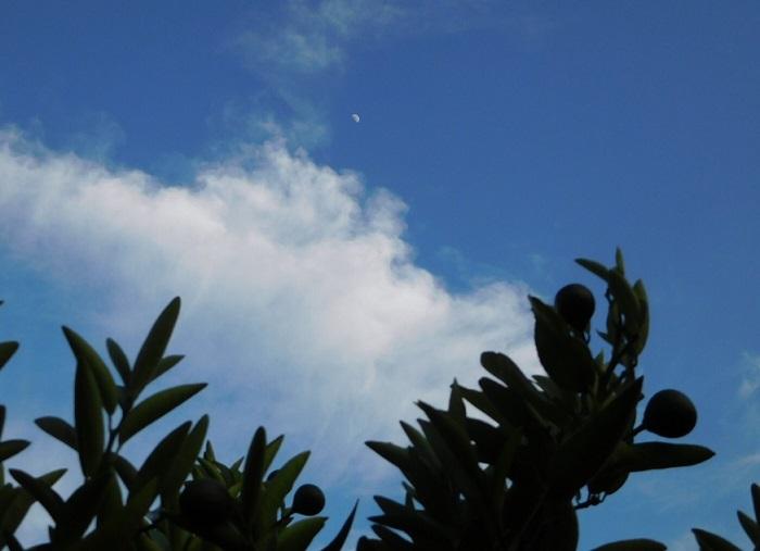晴れ間の月3006