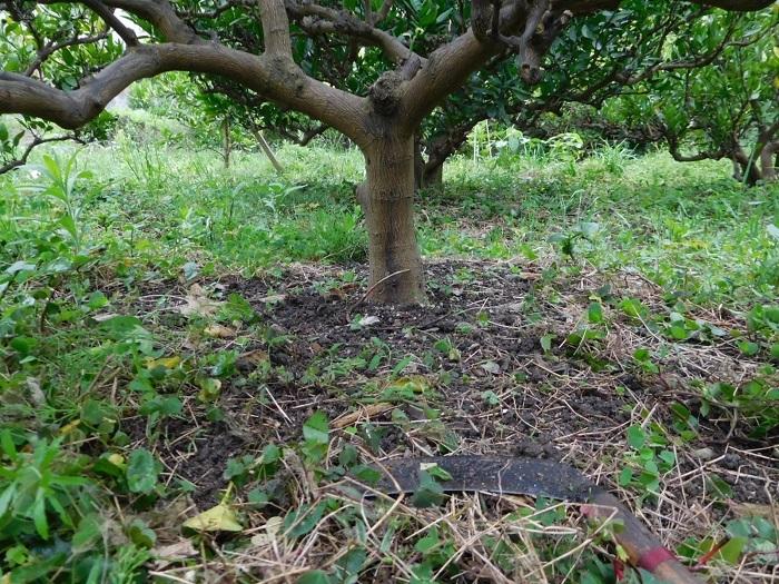 小雨の草刈3006 (1)