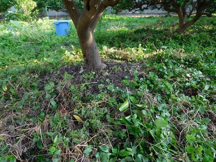 草刈り作業3006