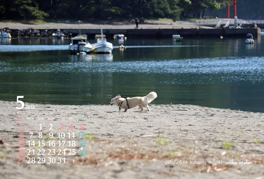 201805 御浜岬にてりんの朝んぽ_dp用