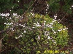 花の里19