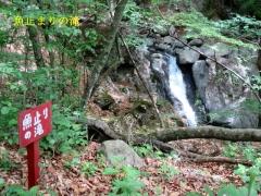 魚と止りの滝