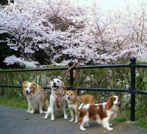 2009-0407-桜の下でお友達と