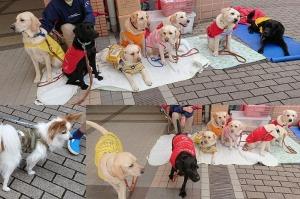 0519-引退犬&コメちゃん