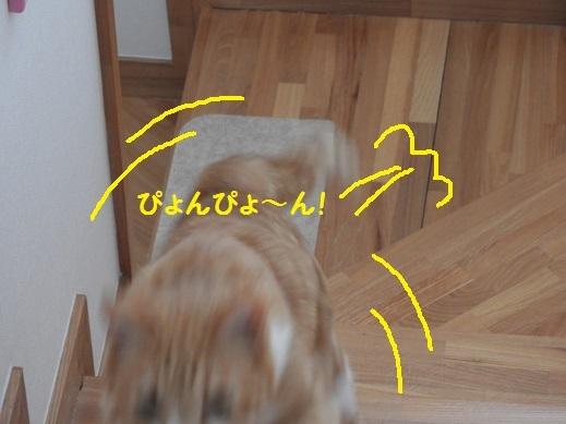 DSCN6769.jpg