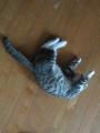 ネコは踊りながら寝る