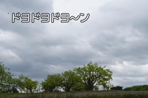 森カフェ5
