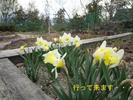 DSC03333sd.jpg