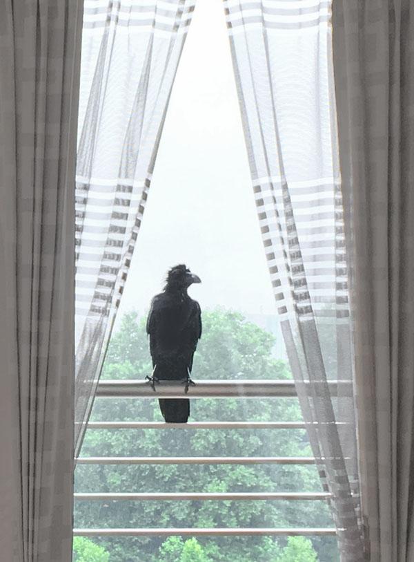 crow-600813.jpg
