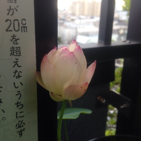 fc2blog_201807091115001f4.jpg