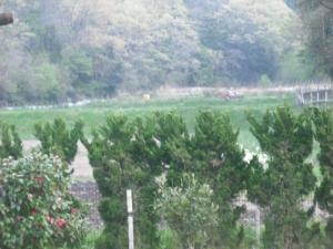 180422第1圃場を耕耘