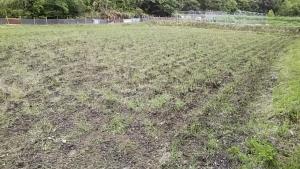 180525堆肥を撒いた田