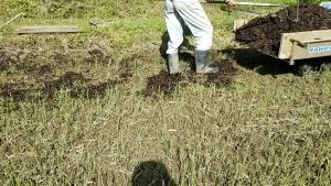 180525田に堆肥を撒く