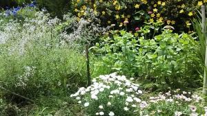 180621花壇1