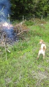 180623焚き火とサブ