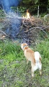 180623焚き火に近づくサブ1