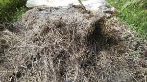 180626刈っておいた草