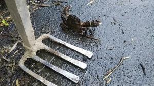 180628蟹と鍬