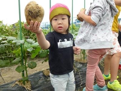 20180526 potato (4)