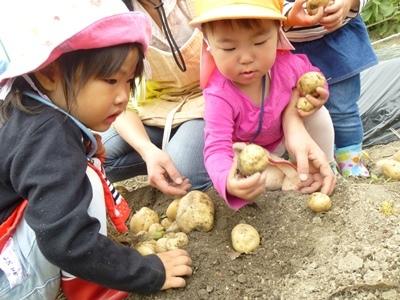 20180526 potato (5)