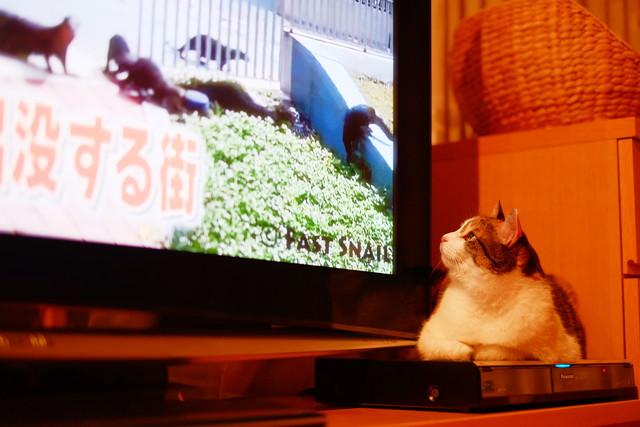 TV1DSCF6898.jpg