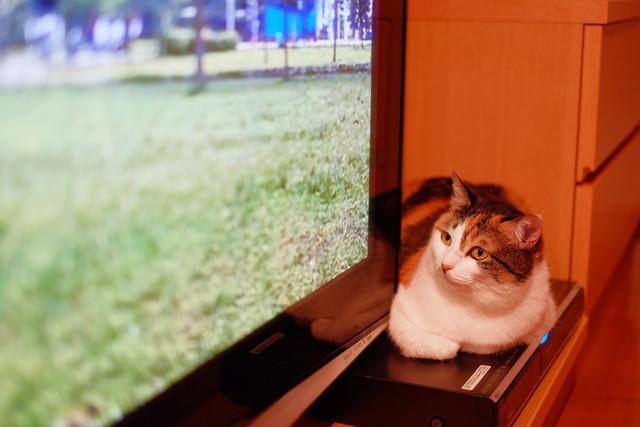 TV2DSCF6900.jpg