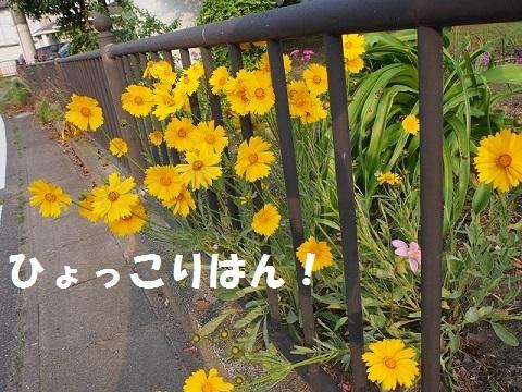 P5180240.jpg
