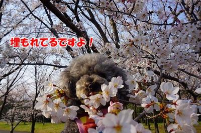 s-DSC03110.jpg