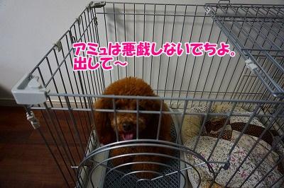 s-DSC03362.jpg
