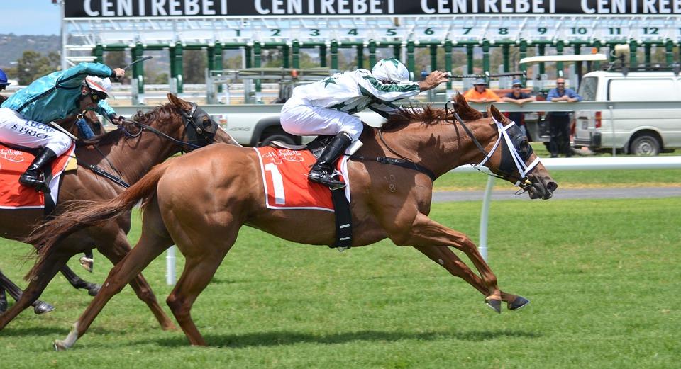 horses-380402_960_720.jpg