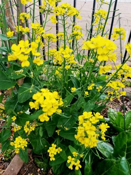 春、花 1