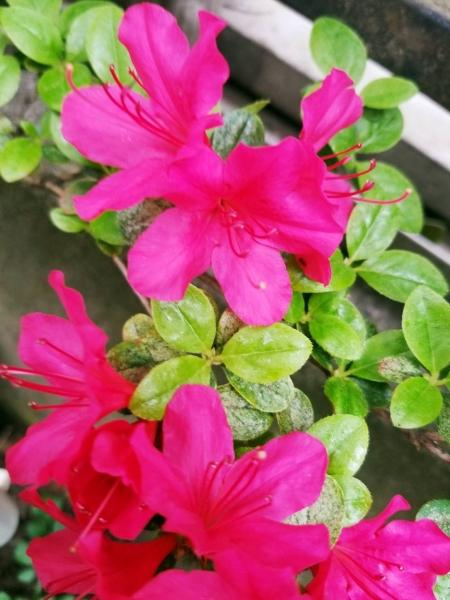 春、花 2