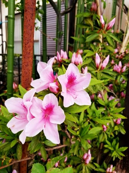 春、花 3