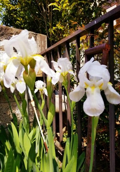 春、花 4
