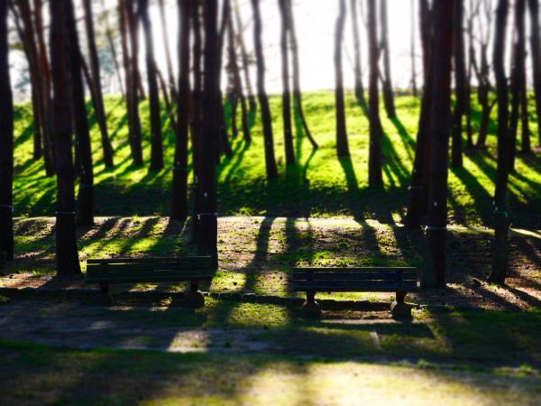 松林公園1ー1