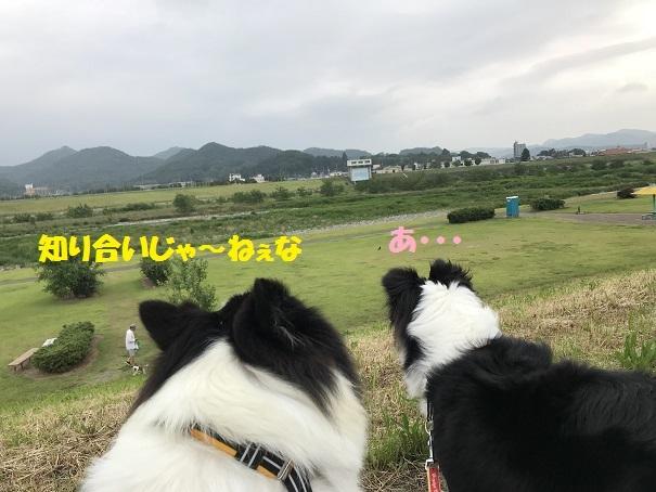 IMG_2150_20180612202810d65.jpg