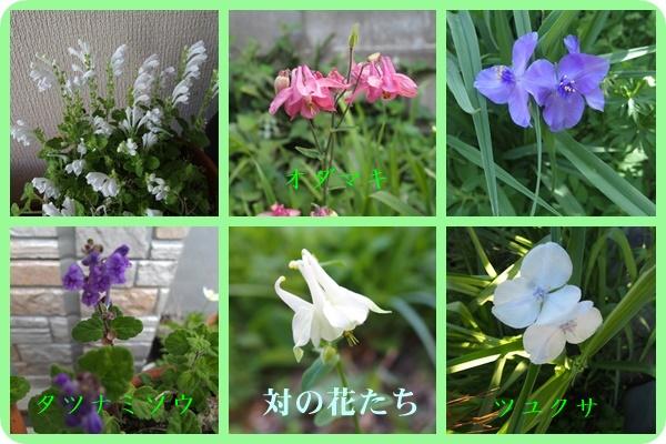 対の花たち