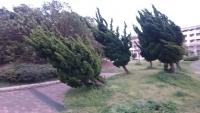 傾いた公園の木