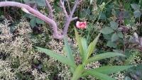 オレンジ色の外来種の花