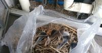 鳥の巣の片付け