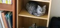本棚にいるネコ