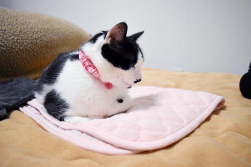 くぅ枕カバー