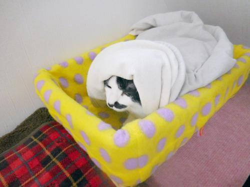 くぅ毛布ほっかむり