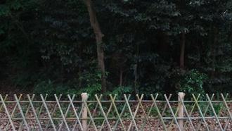 鶴岡八幡宮(流鏑馬) TARI TARI 聖地巡礼